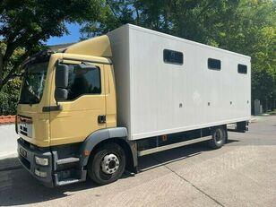 MAN Pferdetransporter paardenvrachtwagen